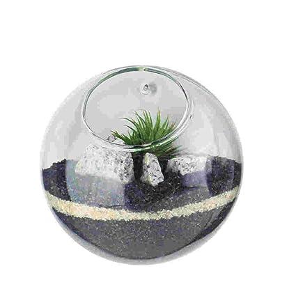 Amazon Com Glass Terrarium Planters Decoration Wall Hanging Vases