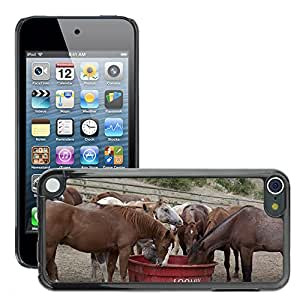 Hot Style Cell Phone PC Hard Case Cover // M00130043 Horses Grazing Eating Ranch Dude // Apple ipod Touch 5 5G 5th