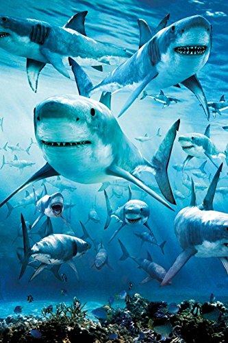 Shark Infested Poster Art Print