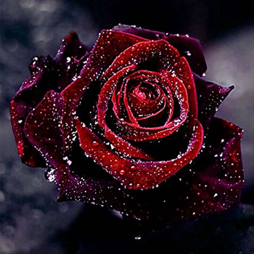 Smartcoco 5D DIY Diamond Painting Red Rose Wall Sticker 3D Diamond Mosaic Cross Stitch Embroidery ()