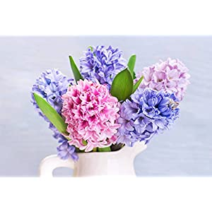 Colorful Hyacinths Flowers.. 39