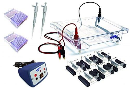 Dna Electrophoresis Gel - Walter Products EL-600-24 Electrophoresis Classroom Kit