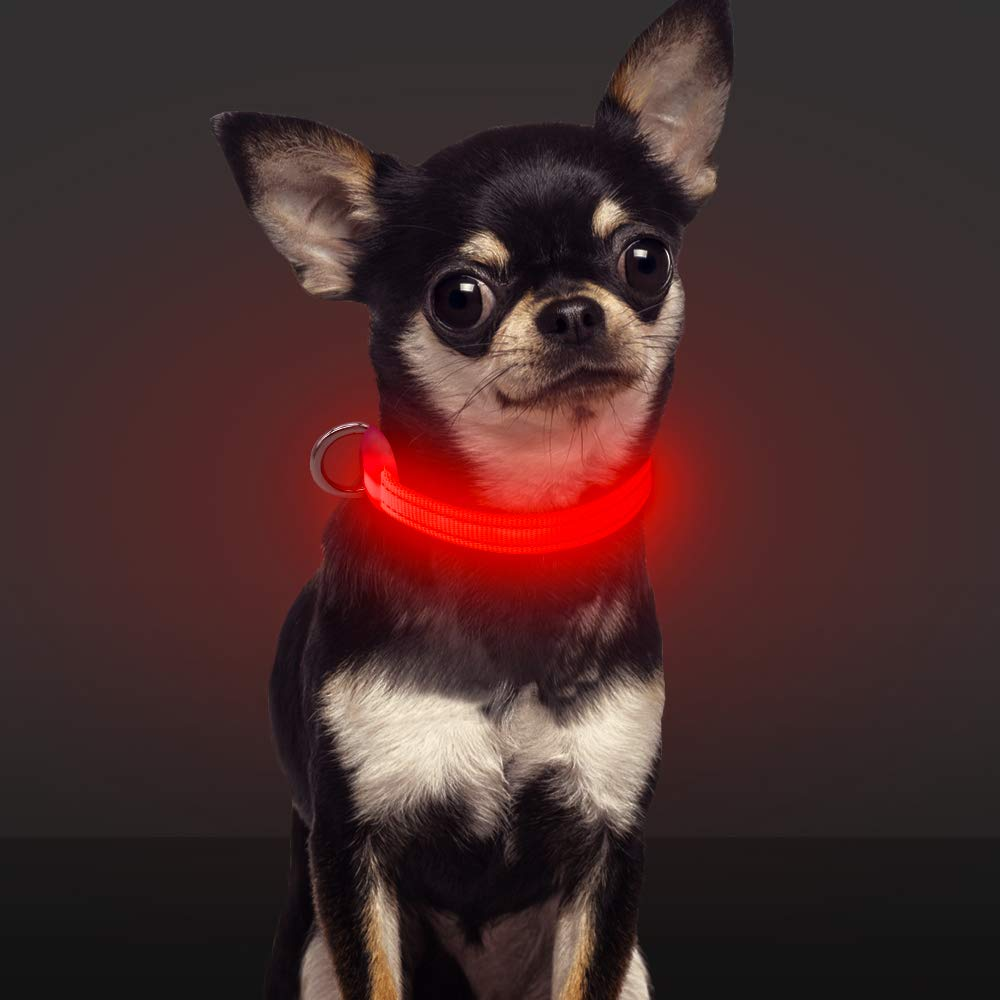 Domi LED Dog Collar-USB Rechargeable Flashing XS Adjustable Light Up Dog Collar- Makes Your Dogs Visible, Safe & Be Seen (XS, Red)