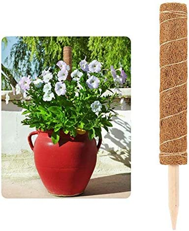 dewdropy Unterstützung Von Kokosnusspflanzen, Totempfahl Für Kokosnuss, Kokospalmenstab, Sichere Gartenarbeit Für Kletterpflanzen, Weinreben Und Kriechpflanzen