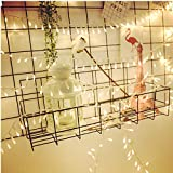 fairy garden String Light Dailyart LED Starry Light Fairy Light for Garden,Wedding,Xmas Party (100led 32.5feet/10meters) (Warm white)