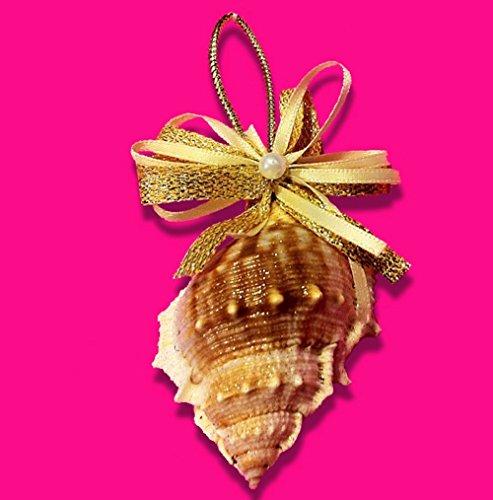 Bursa Sea Shell Ornament TFTS-15 Treasure From The Sea
