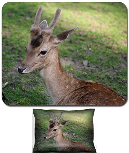 (Luxlady Mouse Wrist Rest and Small Mousepad Set, 2pc Wrist Support design IMAGE: 34264298 Young male roe deer laying on the grass)