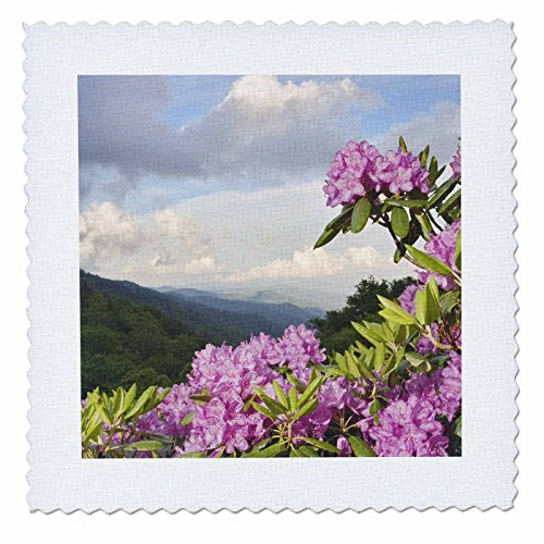 3dRose qs_93170_1 Catawba Rhododendron Flower, Great Smoky Mountains, NC-US34 AJE0046-Adam Jones-Quilt Square, 10 by 10-Inch