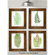 Antique Fern Botanical Prints - Set of Four Photos (8x10) Unframed