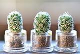 Snowball Cactus Terrarium Keychain Accessory