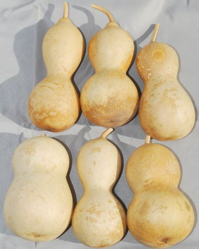 Dried Decorative Gourds Medium Amazon Co Uk Kitchen Home