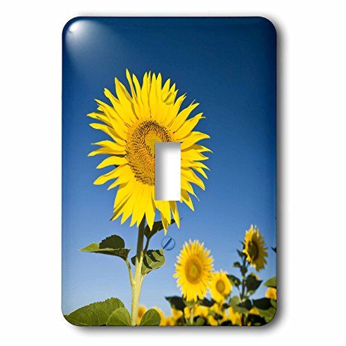 3dRose lsp_81391_1 France, Provence, Valensole. Sunflowers Eu09 Bth0015 Brenda Tharp Single Toggle Switch