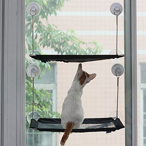 cat window perch   durable cat hammock for window with 6 patent suction cups hold up to 45lbs safe sunny seat window mounted cat bed perfect strong kitty     cat window perch   durable cat hammock for window with 6 patent      rh   catsstore