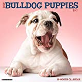 Just Bulldog Puppies 2017 Wall Calendar (Dog Breed Calendars)