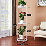 CSQ Creative Flower Rack, Iron Art Pattern Wheel Landing Plant Stand Bedroom Living Room Balcony Black/White Without Flower Pots Flower Shelf