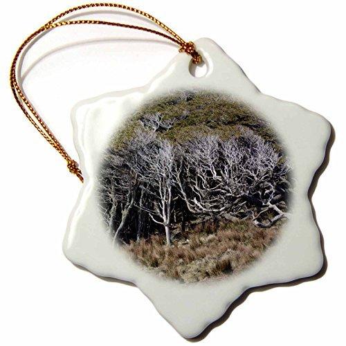 (KIKE CALVO Patagonia ISLA DE LOS ESTADOS - Tussock Grasses and Coigue, Staten Island - 3 inch Snowflake Porcelain Ornament)