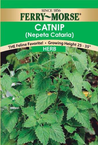 - Ferry Morse Herb Catnip Seeds