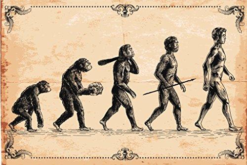 Human Evolution Concept Vintage Illustration Art Print Poster 18x12 -