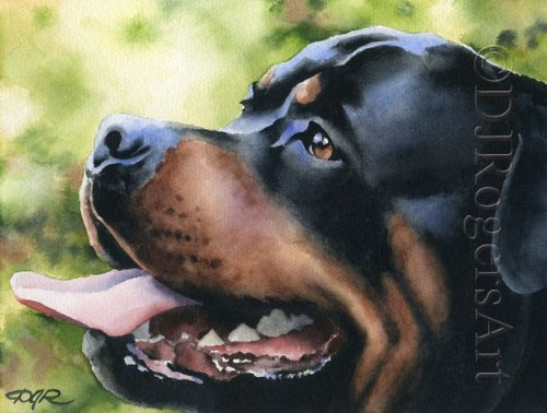 rottweiler pictures - 1