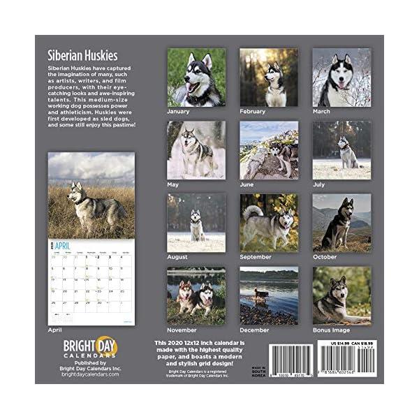 Siberian Huskies Calendar 2020 1