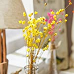 100-Stems-Natural-Dry-Flowers-Brazilian-Small-Star-Daisy-Decorative-Dried-Flowers-Mini-Daisy-Chamomile-Bouquet-for-Wedding-Floral-Arrangements-Home-Decorations
