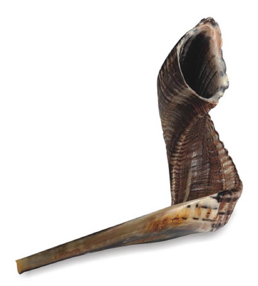 Ram's Horn Shofar Kosher Large Size 18.5 Polished Black / Dark Sho-0833