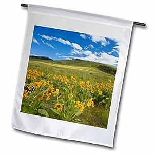 Danita Delimont - Montana - Arrowleaf balsomroot, National Bison Range, Montana - US27 CHA1847 - Chuck Haney - 12 x 18 inch Garden Flag (fl_91880_1)