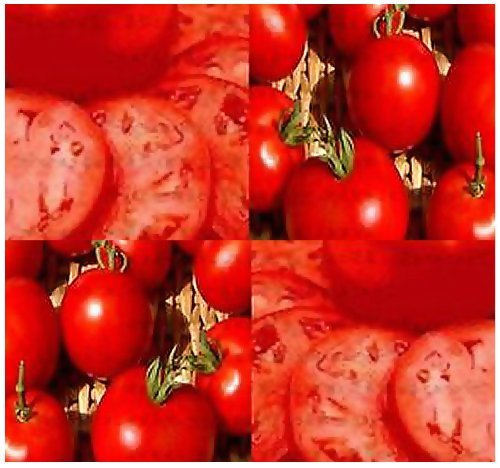 (HOMESTEAD Tomato Seeds - HEIRLOOM Tomato - SWEET & JUICY - Excellent grower ~ HEAVY YIELDS - 80 - 85 Days (00150 Seeds - 150 Seeds - Pkt. Size))