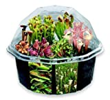 S&S Worldwide Carniverous Creations Plant Growing