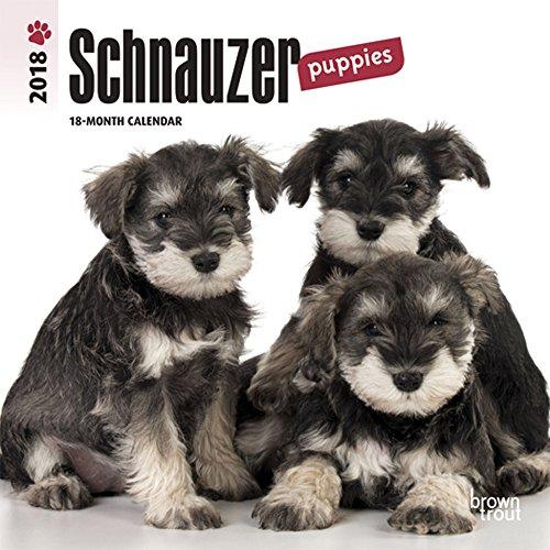 Schnauzer Puppies (Schnauzer Puppies 2018 7 x 7 Inch Monthly Mini Wall Calendar, Animals Dog Breeds Puppies (Multilingual Edition))