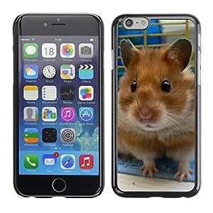 Carcasa Funda Case// Hamster V0000016 //Apple Iphone 6 Plus 5.5