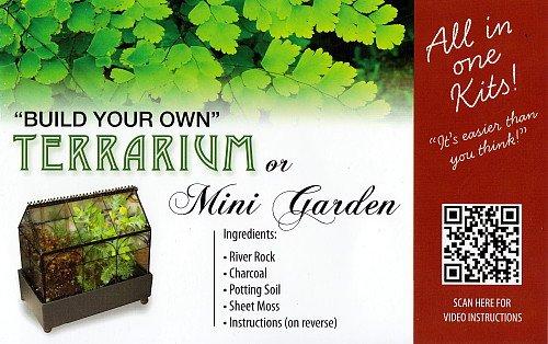 Amazon Com Terrarium Fairy Garden Kit Create Your Own Living
