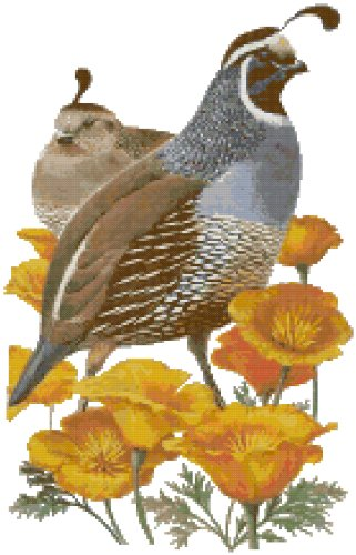 California State Bird (California Quail) and Flower (California Poppy) Counted Cross Stitch Pattern