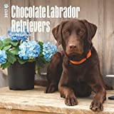 Chocolate Labrador Retrievers Dogs Wall Calendar Lab 2017 {jg} Best Holiday Gift Ideas - Great for mom, dad, sister, brother, grandparents, , grandchildren, grandma, gay, lgbtq.
