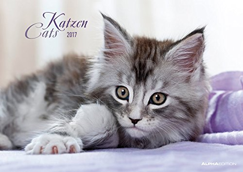 Katzen 2017 - Cats - Bildkalender (42 x 60 geöffnet) - Tierkalender