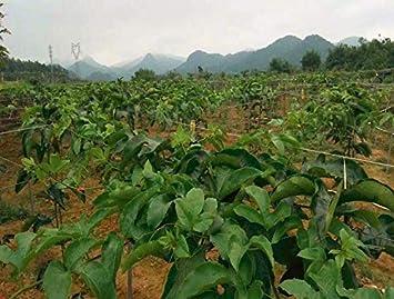 jard/ín para plantas red antip/ájaros en cancha de tenis cargas pesadas de polietileno 36/cuerdas Red multiusos de Mitefu cr/ía de aves