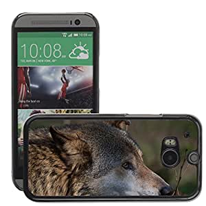 Super Stella Slim PC Hard Case Cover Skin Armor Shell Protection // M00144987 Wolf Animal Canis Lupus Predator // HTC One M8