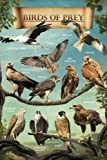 Posters: Birds Poster - Birds Of Prey (36 x 24 inches)