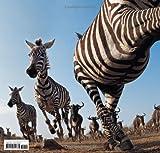 Serengeti Spy: Views from a Hidden Camera on the