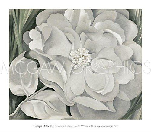 The White Calico Flower, 1931 by Georgia O'Keeffe 25