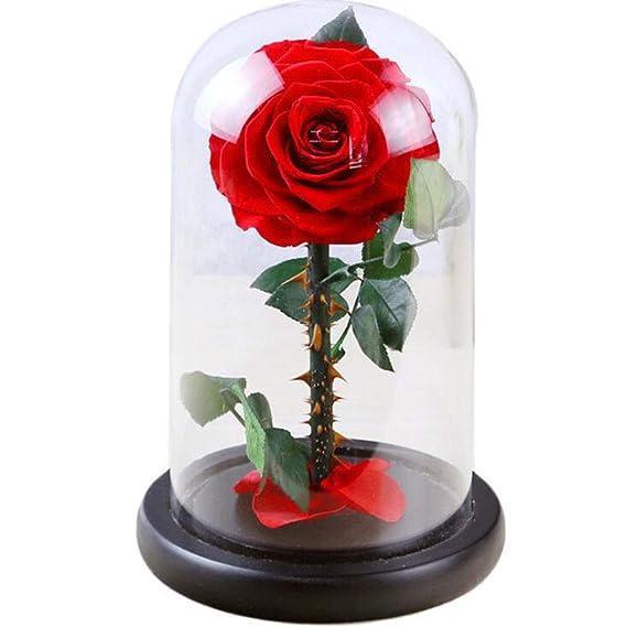 Love Life Niña Regalo Flor Eterna Acabado Vidrio Cubierta Rosa Príncipe Solo Púrpura Rosa,Red: Amazon.es: Deportes y aire libre