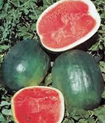 Watermelon Black Diamond Non GMO Heirloom Fruit 20 Seeds by Sow No GMO