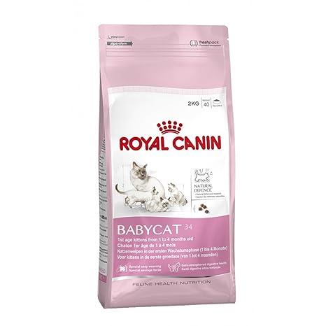 Royal Canin Babycat 34 - Comida seca para gatos (2 kg)