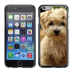 PC/Aluminum Funda Carcasa protectora para Apple Iphone 6 Plus 5.5 Norfolk Terrier Puppy Summer Dog / JUSTGO PHONE PROTECTOR