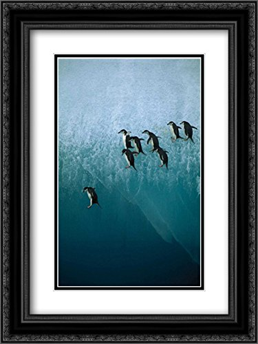 Chinstrap Penguins Group Jumping Off Blue Iceberg into Water Below, Sandwich Islands, Antarctica 2X Matted 18x24 Black Ornate Framed Art Print by Ferrero, Jean-Paul -