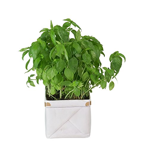 Patch Planters Easy, Compact Self Watering Herb & Greens Planter - Single Planter