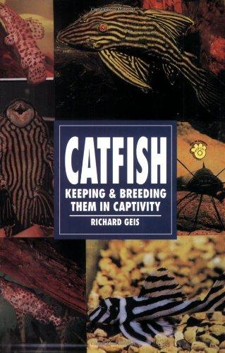 Catfish: Keeping & Breeding Them in Captivity