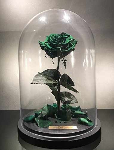 Bella Rose (Forest Green) Fresh Cut Preserved Rose in Glass Cloche. SHE WILL LOVE IT - World's Longest Lasting Roses by Roses & Forever LLC (Image #2)'