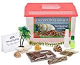 LIVE Pet Hermit Crab Complete Kit - SHIPPED WITH 2 Live Crabs