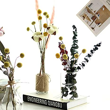 Dongliflower 50 Stems//Pcs Dried Natural Craspedia Flowers,Billy Button Balls,17 Tall